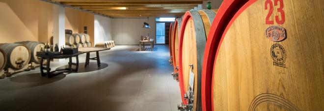 Etichette dedicate alla famiglia: Di Sante scelta bio per olio e vino
