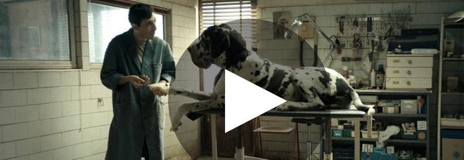 Dogman di Matteo Garrone candidato agli Oscar come miglior film straniero