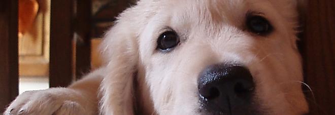 Ansia da esami? Accarezzare un cucciolo aiuta: lo dice la scienza