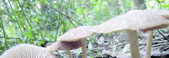 Raccolta funghi, l'incognita dell'Uti