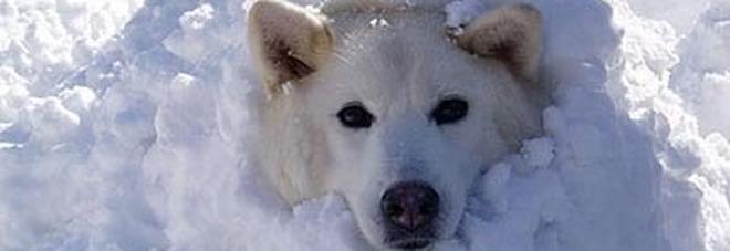«Fa un freddo cane»: ecco perché si dice così