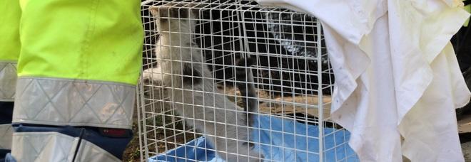 Salvato un gattino intrappolato 16 ore nel motore di un'auto