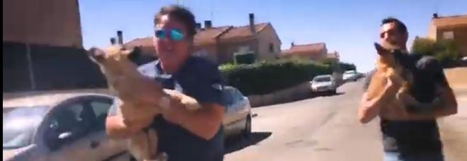 Il veterinario Victor Larkhill rapisce due cagnolini dal padrone violento per dare loro una nuova famiglia