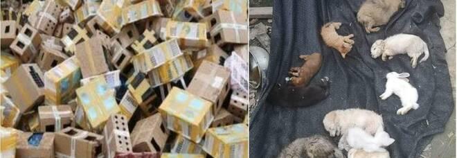 Cina, trovati morti oltre 5mila tra gatti, cani e coniglietti chiusi in scatole di cartone. Dovevano essere spediti in tutto il mondo