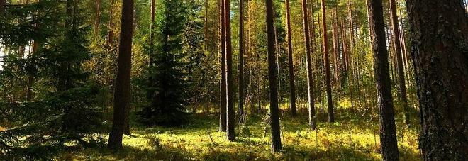 anello ritrovato 47 anni dopo usa foresta finlandia mistero san valentino