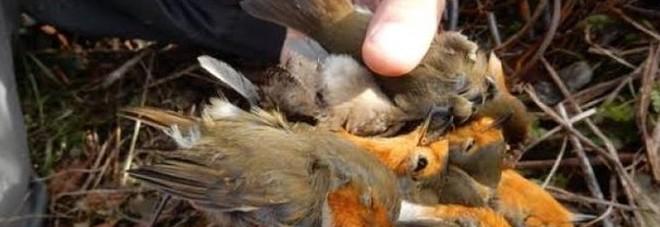 In valigia avevano quasi 1.200 uccellini morti: cacciatori scoperti e denunciati in aeroporto