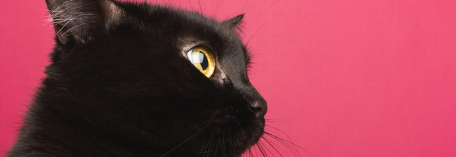 Giornata Nazionale del Gatto, gli italiani non badano a spese per il micio: ecco quanto ci costa