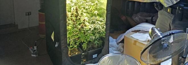 Il turista sente uno strano odore: nel sottotetto del B&b c'è una serra di marijuana
