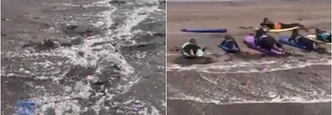 Tenerife, spiaggia invasa dalla plastica: la disperazione degli attivisti