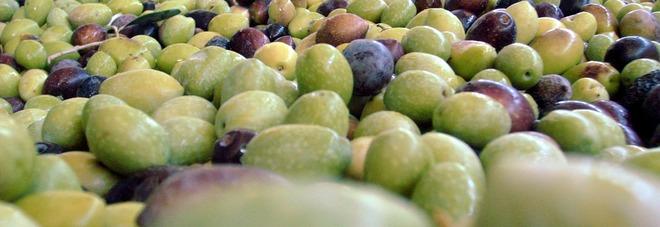 Olive che passione: proteggono il cuore e prevengono il cancro. Ecco tutte le proprietà benefiche di questo frutto