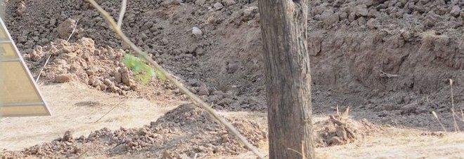 «C'è un leopardo nascosto, trovalo»: la foto che fa impazzire gli utenti di tutto il mondo