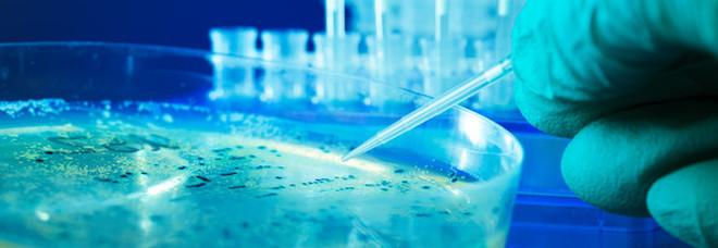 Virus cinese, l'esperto spiega come difendersi dal batterio