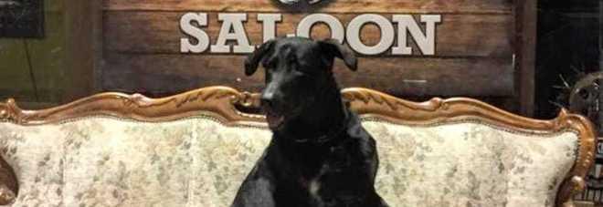 PROTAGONISTA Il cane Tequila al Nasty Boys e il menù ad hoc