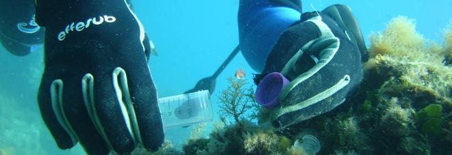 Sub mentre prende la lumaca di mare