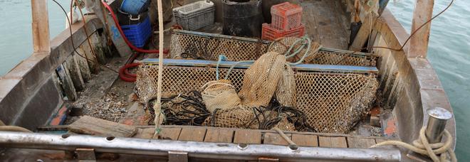 Sono tornate le mucillaggini i pescatori alzano bandiera bianca: «Le reti affondano»