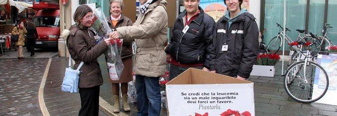 Uno dei gazebo organizzati dall'Ail per la vendita delle Stelle di Natale per la ricerca contro le leucemie