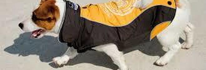 Droga nel cappottino del cane e spaccio nell'area riservata agli animali
