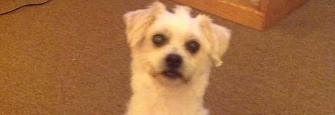 Chico, il cagnolino di 18 anni sepolto vivo perché non andava d'accordo con il nuovo gatto di casa
