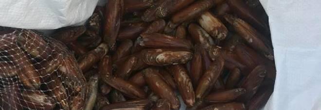 Scogliere distrutte a colpi di martello per pescare i datteri di mare: 46 sotto accusa