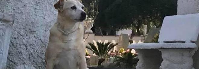 Nicoletta, da 10 anni veglia la tomba del padrone ma ormai è vecchia: l'appello su Facebook per aiutarla