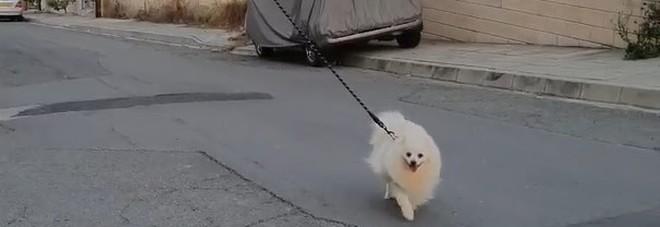 Coronavirus, il cane a passeggio guidato col drone: l'idea del padrone per non violare l'isolamento