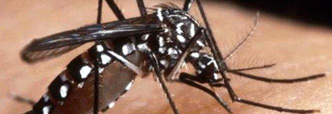 Zanzara tigre, stop donazioni per 1,2 milioni di romani