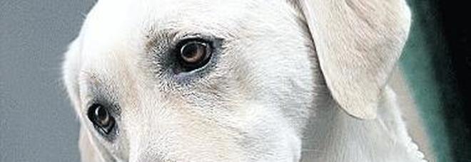 Epilessia, i cani aiutano  a prevedere le crisi