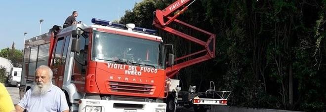 Mondolfo, favo di calabroni lungo un metro: devono intervenire i pompieri