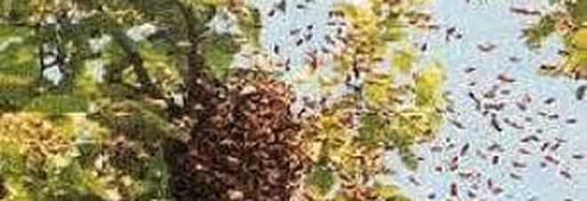 Muore in campagna assalito da uno sciame di api. Trovato il corpo ricoperto di insetti