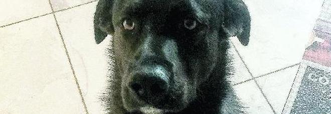Colpo fallito in casa, ma dopo il passaggio dei ladri sparisce l'amato cagnolino