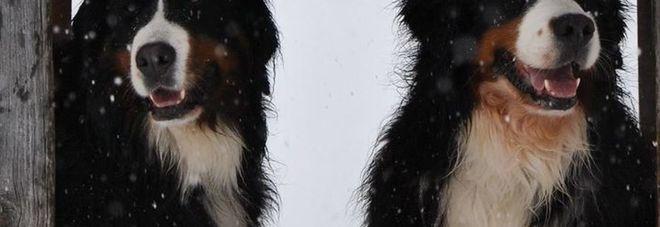 Sondrio, per scappare dal cane sale sul muretto e muore: condannati i padroni