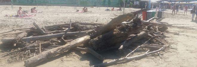 """La segnalazione WhatsApp """"Ecco com'è la spiaggia di Falconara"""""""