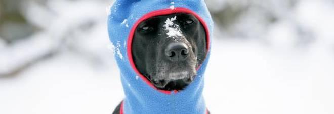 Gelo polare: ecco le regole salva-vita per Fido