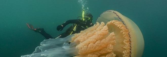Medusa gigante avvistata in mare: «Grande quasi quanto un uomo». Le immagini impressionanti