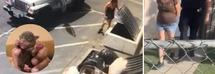 Arrestata la donna che aveva gettato 7 cuccioli nei rifiuti