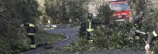 Albero abbattuto dal forte vento sulla Cassia colpisce furgone: illeso il conducente