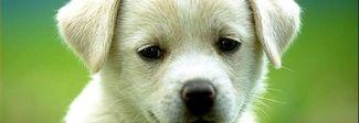 Lascia il cane in terrazza al freddo e sotto la neve: denunciato