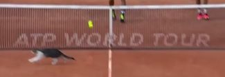 Internazionali, gatto invade il campo durante un match di doppio sul Pietrangeli
