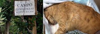 Cani e gatti avvelenati, è strage: scatta la caccia ai killer