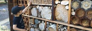 Aprono a Roma i primi Beehotel, alberghi per api solitarie