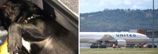 Cane costretto a volare nella cappelliera, muore durante il viaggio