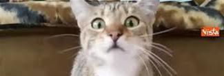 Il gatto guarda il film horror, le sue buffe espressioni conquistano il web