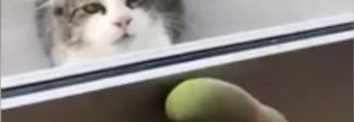 Il pappagallo che vorrebbe giocare a nascondino con un gatto