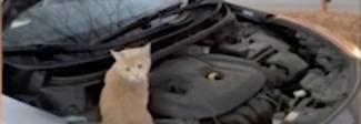 Salvano un gatto intrappolato in un cofano