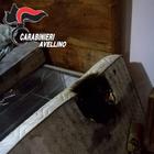Mozzicone di sigaretta incendia letto: 65enne salvata dai carabinieri | Foto