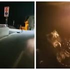 Insegue i cervi in motorino, gli animali terrorizzati si lanciano da un ponte di 30 metri