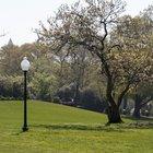 Usa, spunta una buca nel giardino Casa Bianca