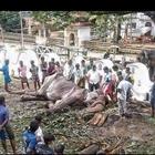 Tikiiri, l'elefantessa malata adesso è in pericolo di vita