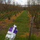 Nel Viterbese diserbanti usati senza regole: fioccano le multe in campagna