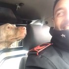 Carabinieri salvano il cane randagio e pubblicano il video esilarante: ora rischiano una sanzione